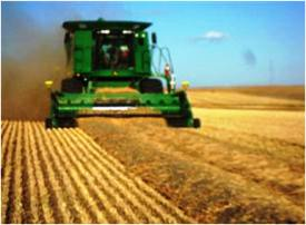 Double windrow being combined