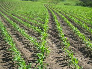 Swath Control Pro helps to minimize overplanting