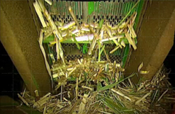 Flow of cane being scanned