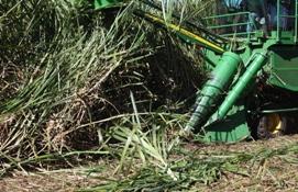 Crop dividers lift fallen cane