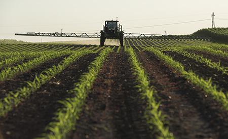 Pulverización en cultivos erguidos