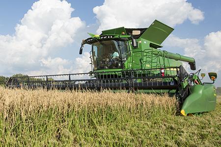 Harvesting in rice