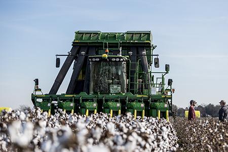 CP690 harvesting