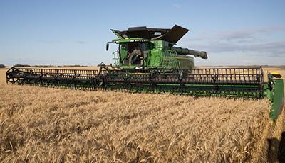X Series harvesting wheat