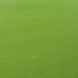 Zmniejszanie śladów po nakładce — paspalowa bieżnia pola golfowego