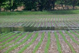 Evite que el agua forme un estanque